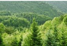 森林覆盖率
