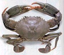 青蟹(图3)