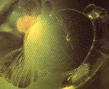 橄榄石中的荷叶状包体