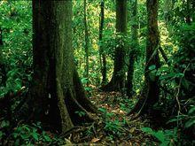 季雨林灌木