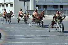 巴基斯坦疯狂驴车大赛