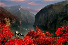 瞿塘峡红叶