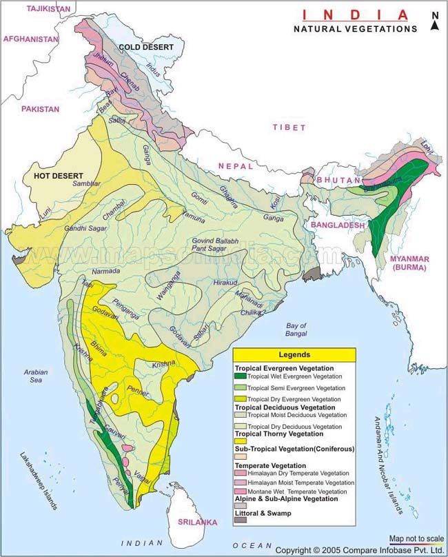 what is the percentage of natural vegetation in india Vegetation is an assemblage of plant species and the ground natural vegetation refers to plant life undisturbed by humans in its growth and which is controlled by.